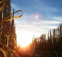 End Of Harvest by Craig Shillington