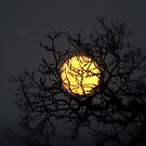 """"""" Yellow Moon Winter """" by Richard Couchman"""