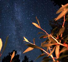 Leaves Reaching for the Milky Way by bmarshallphotos