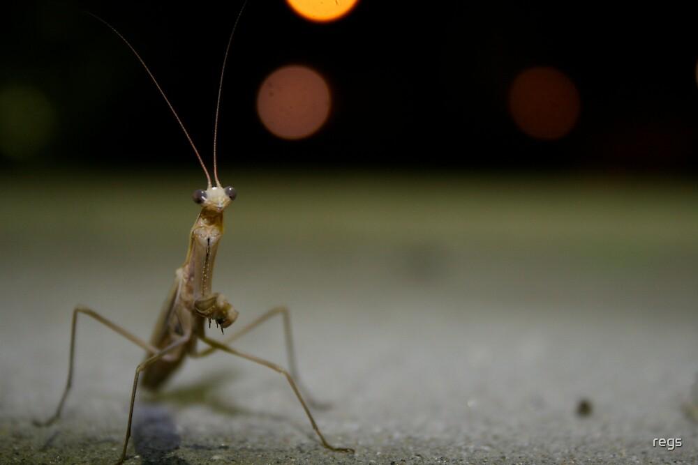 mantis by regs