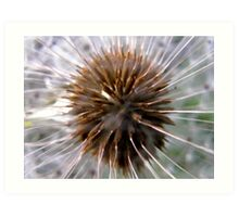 Seed head of a Dandelion Art Print