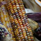 Indian Corn Chartreuse by Carmen Mandel-Cesáreo