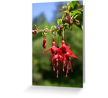 wild flowers of cork Greeting Card