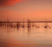 Sunset- Lake Wollumboola #5 by Noel Elliot