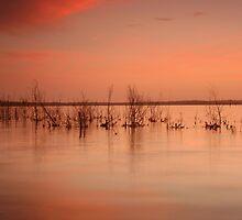 Sunset- Lake Wollumboola #5 by Noel Elliot