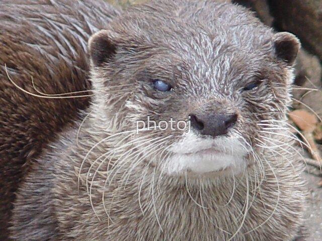 photoj animal S.A. Zoo by photoj