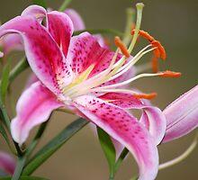 Stargazer Lily by slinnabary