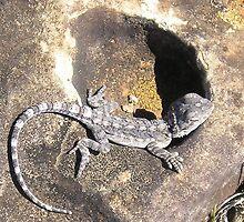 lizard by cass