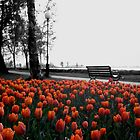 Tulips in Vadstena by Paige