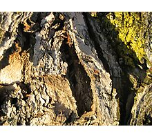 Sunset Bark 5 Photographic Print