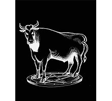 Black and white bull graphic design Photographic Print