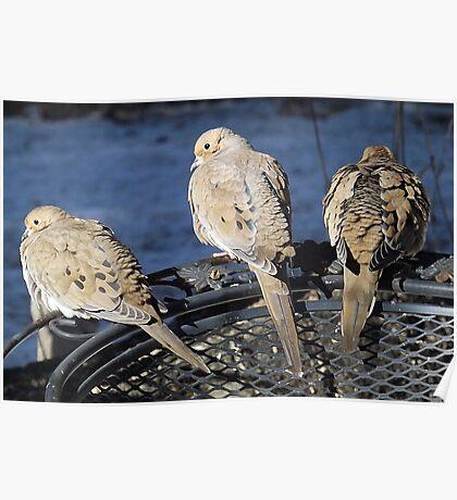 3 Doves Poster