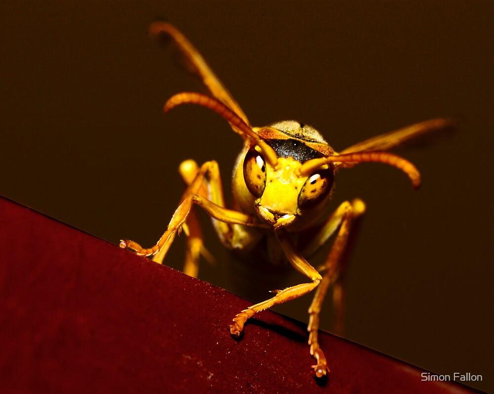 Paper Wasp by Simon Fallon
