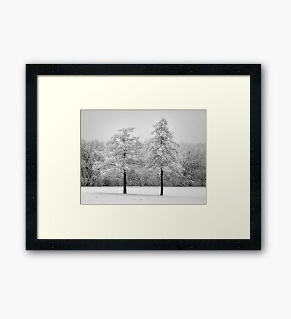 Snowy twin pines Framed Print