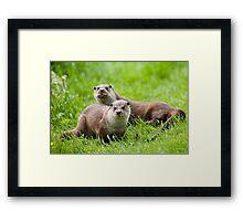 European otters Framed Print