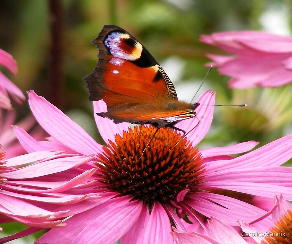 Butterfly by CarolineMannix
