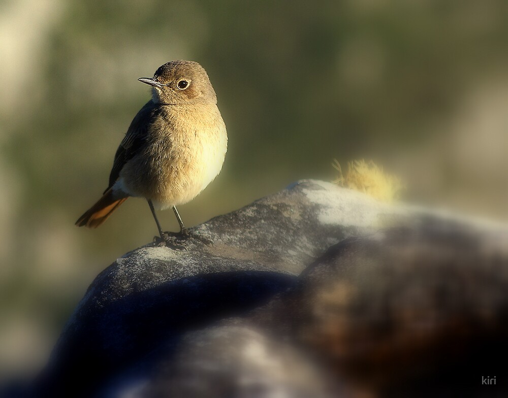 Sparrow by kiri