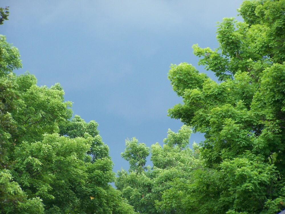 calm before the storm by angela herrington
