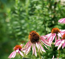 Pink and Green by Jeffrey Sampson