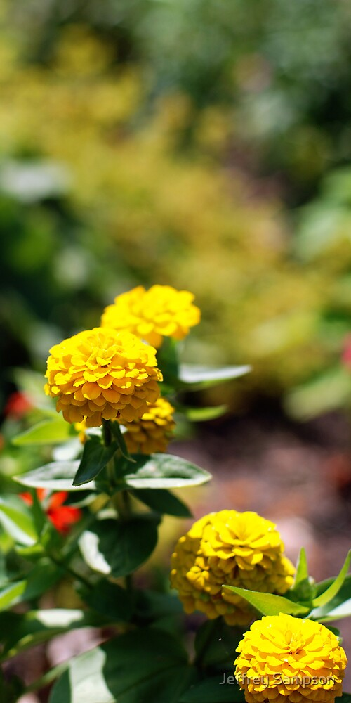 Yellow and Green by Jeffrey Sampson