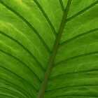 #100  Green Leaf Macro by MyInnereyeMike