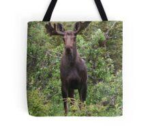 Young Bull Tote Bag