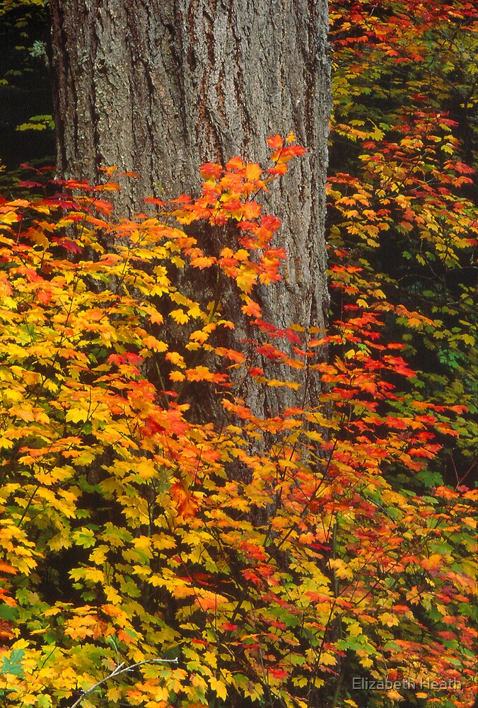 autumn leaves by Elizabeth Heath
