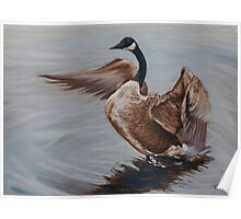Goose On the pond Poster