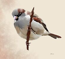 House Sparrow (1) by Bamalam Art and Photography