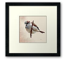 House Sparrow (1) Framed Print