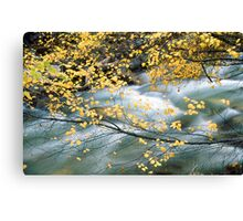 Water through leaves Canvas Print