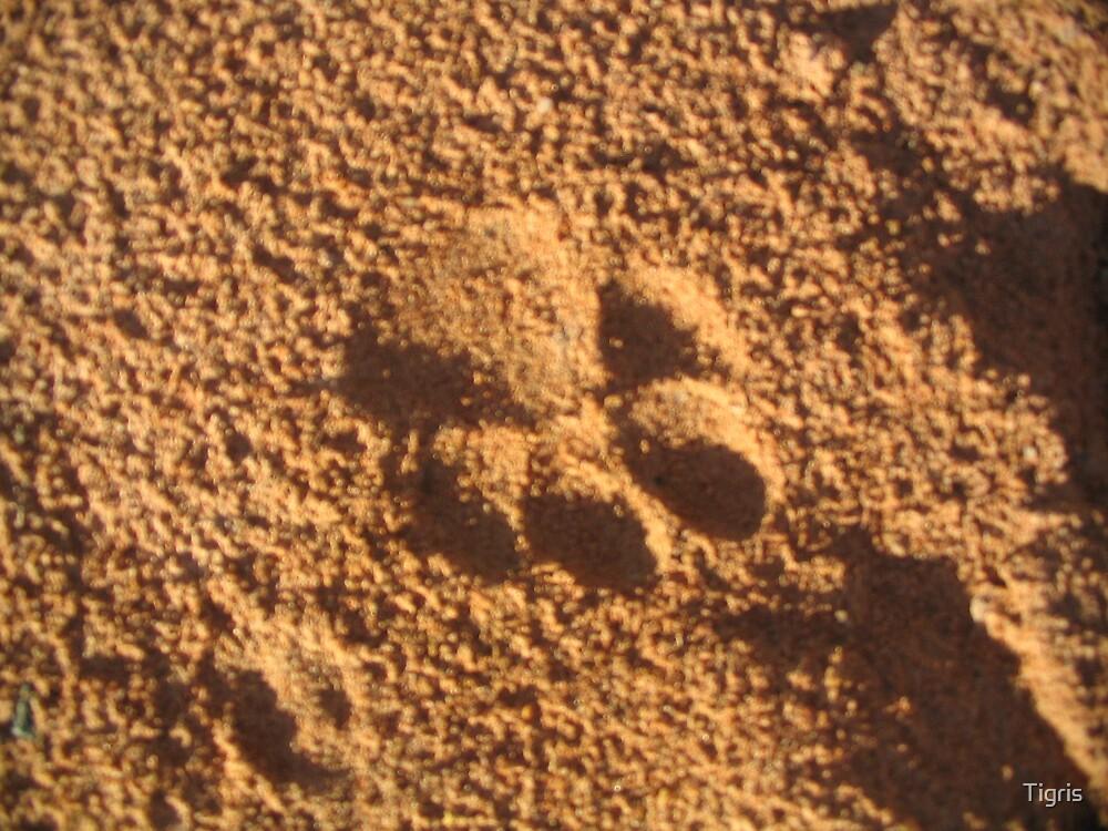 Brown Hyena paw print by Tigris