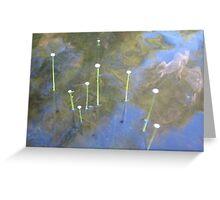 Sugar Lake Waterlillies Greeting Card