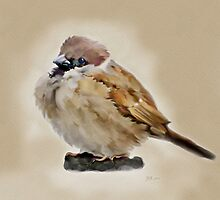 House Sparrow (2) by Bamalam Art and Photography