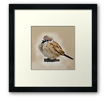 House Sparrow (2) Framed Print
