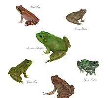 Frog Species by LadyElizabeth