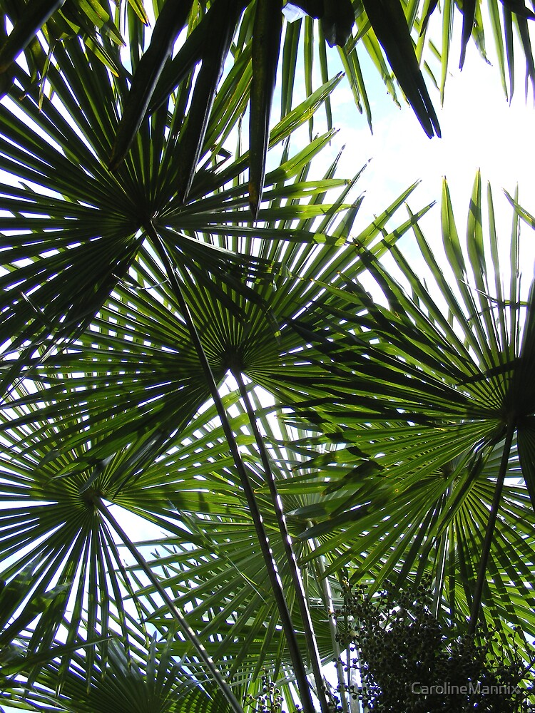 Summer Palm by CarolineMannix