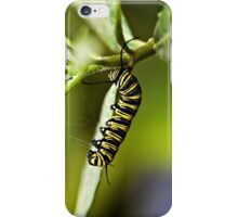 Monarch caterpillar iPhone Case/Skin