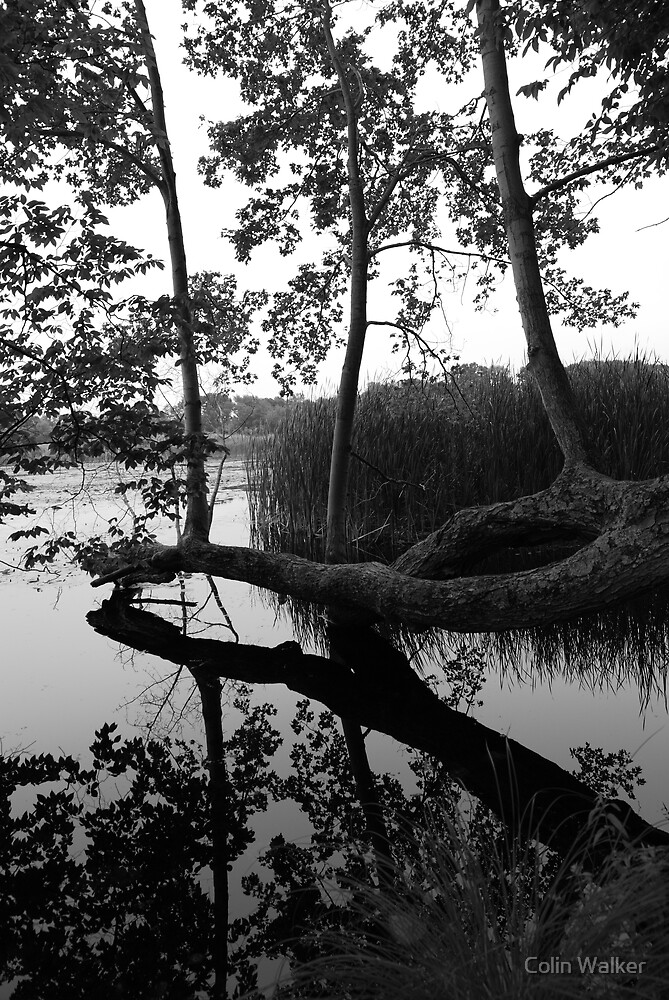 Thompson Pond 1 by Colin Walker