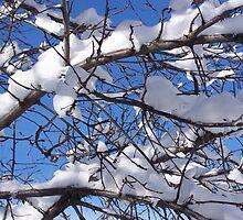 Colorado Snow by aprilandcarl