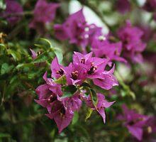 purple flowers by markwalton3