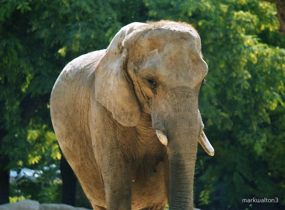 elephant by markwalton3