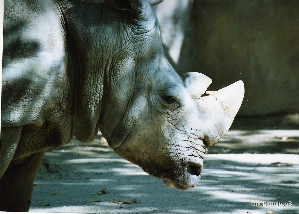 rhino by markwalton3