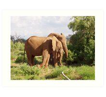 elephants samburu kenya Art Print