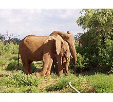 elephants samburu kenya Photographic Print
