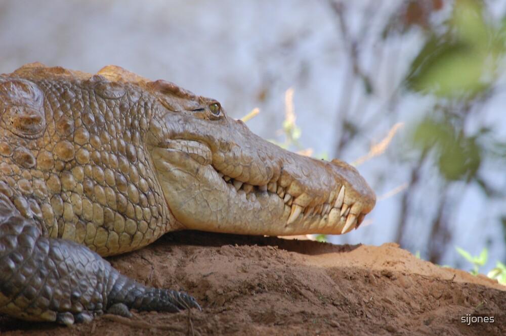 wild crocodile samburu by sijones