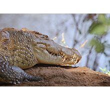wild crocodile samburu Photographic Print