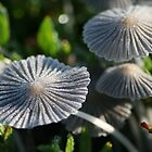 Morning mushrooms by Leo Brown