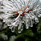 Melting Ice on an Evergreen Tree by Pamela Burger