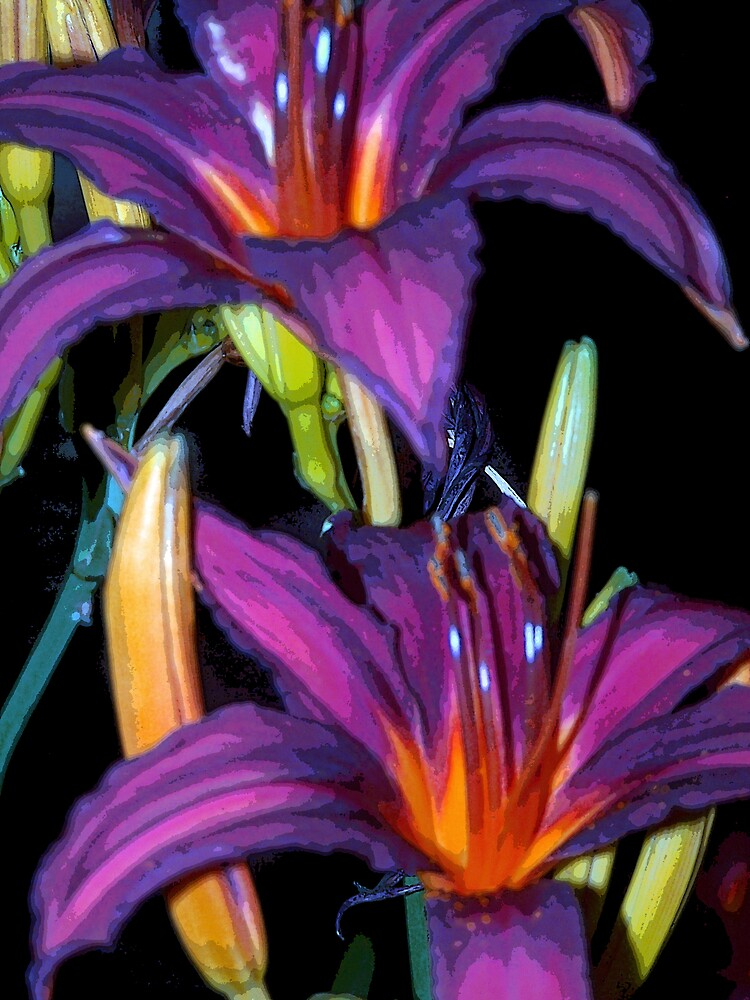 Colorful Lillies by dduhaime55